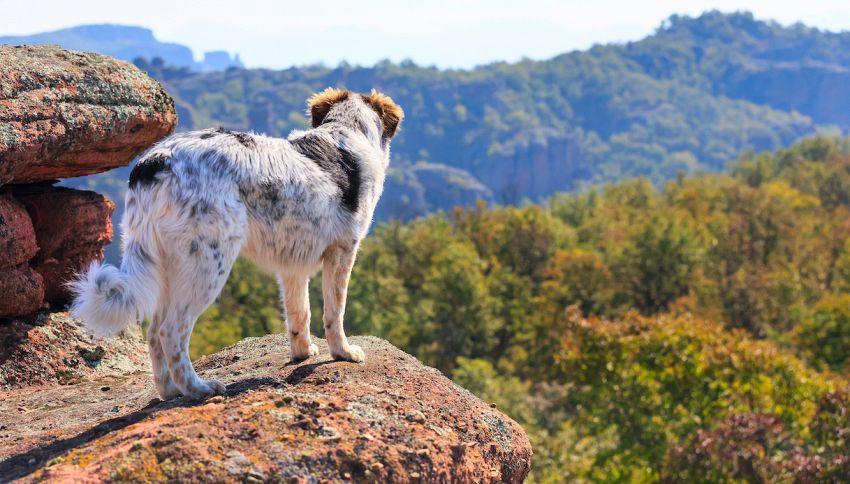 Bloccati su una roccia, due cani salvati con un elicottero