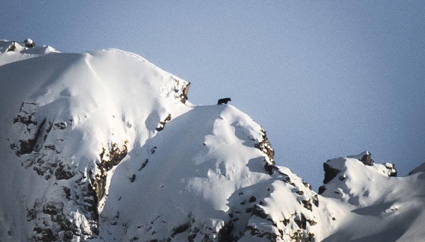 Orso si sveglia dal letargo e passeggia da solo: la foto virale