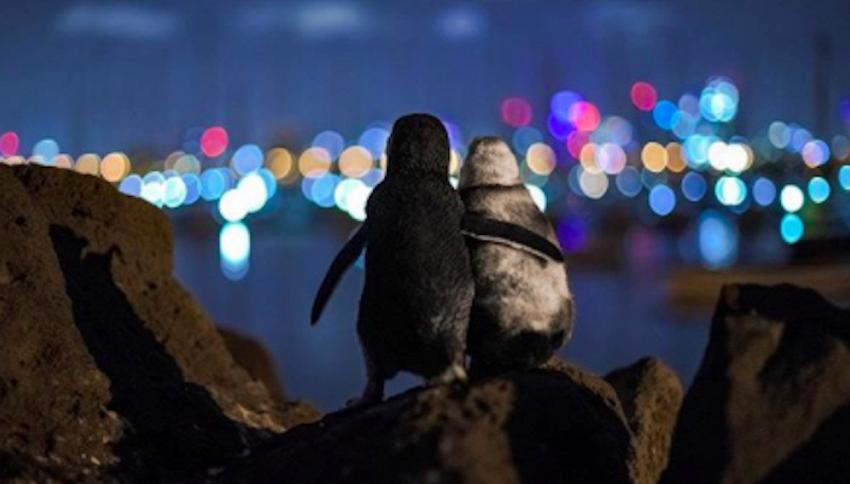 L'amore vince sempre: la storia di due pinguini in uno scatto