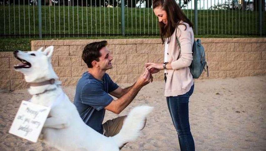 Proposta di nozze in spiaggia, ma il protagonista è il cane