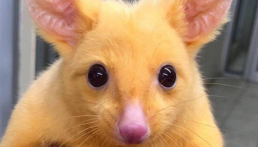 La mascotte della clinica veterinaria sembra Pikachu