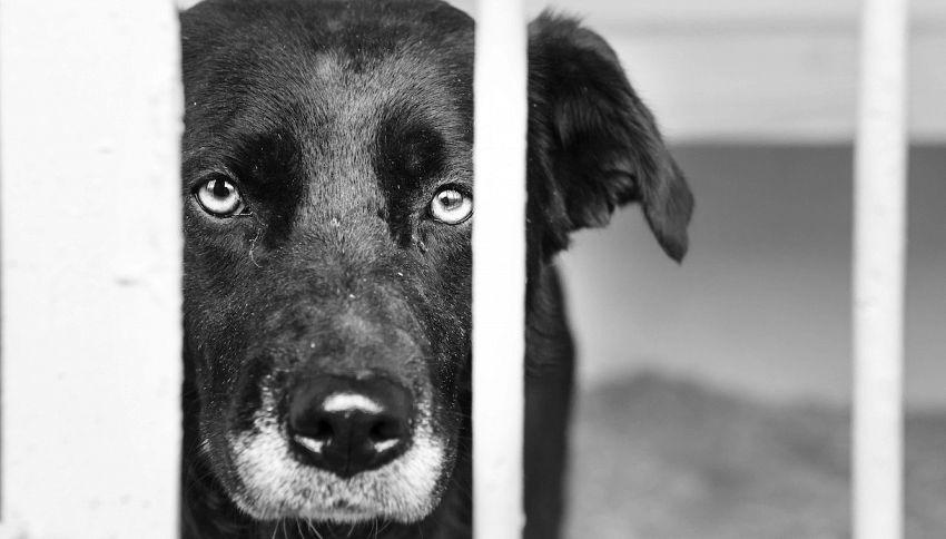 La storia del cane Trento, alle prese con la disabilità