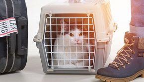 Savona, cercasi 'staffettisti' per trasporto animali