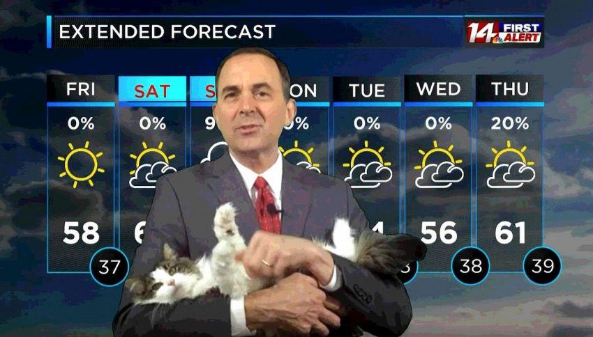 Betty, il gatto diventato ormai un conduttore del meteo