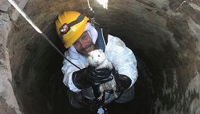 Snowball, la storia del salvataggio del porcellino d'India