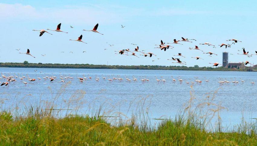 C'è un'oasi di fenicotteri rosa nel siracusano