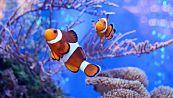 Perché i pesci respirano sott'acqua