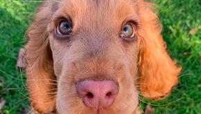 Winnie, il cane con gli occhi da Principessa Disney
