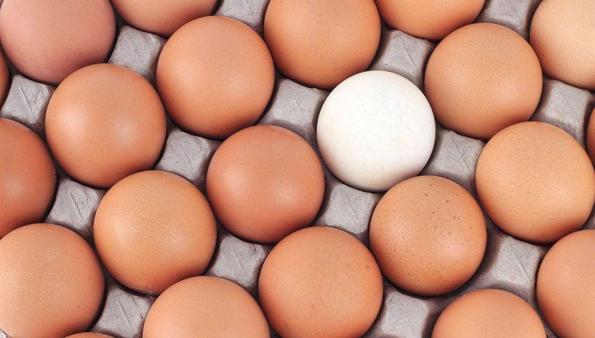 Qual è la differenza tra le uova bianche e quelle scure?