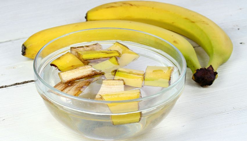 Bucce di banana per fertilizzare le rose: non è uno scherzo