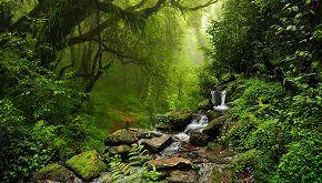 Gruppo di amici acquista un bosco per salvarlo dal disboscamento