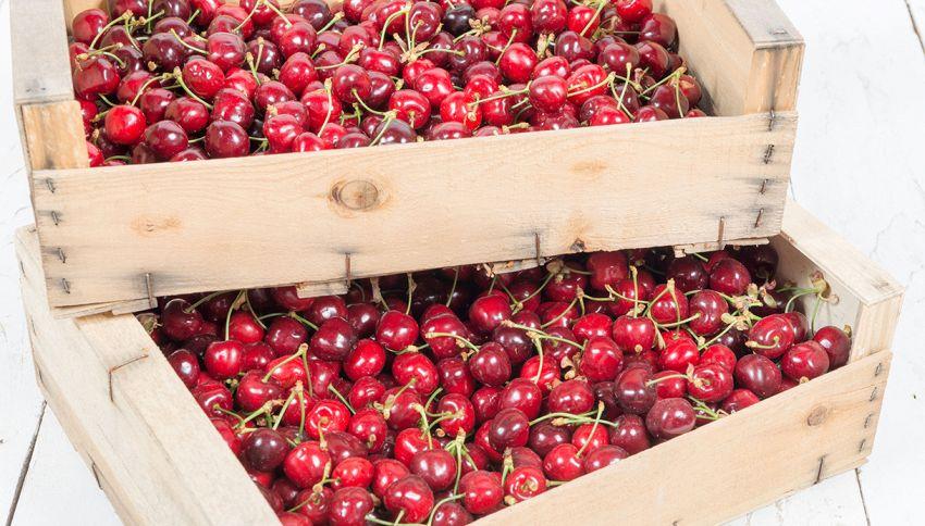 Adotta un ciliegio a distanza: riceverai la frutta a casa