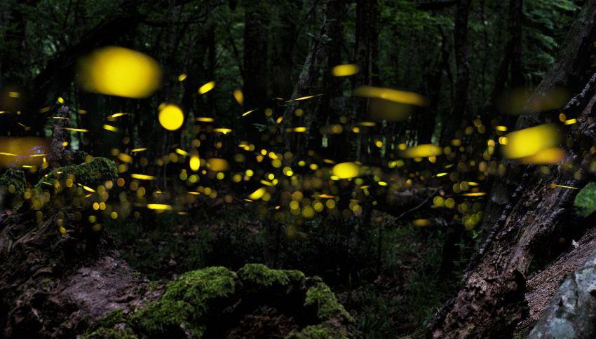 Un elettricista ha creato un 'percorso salva lucciole'