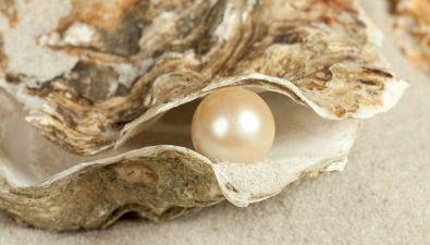 Perché nelle ostriche ci sono le perle?