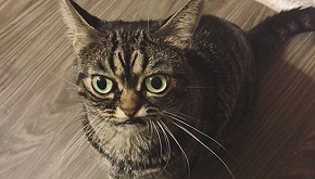 Kitzia, il gatto imbronciato è già una star del web