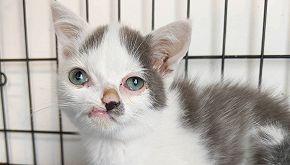 La storia di Pinocchio, il gatto con il naso storto