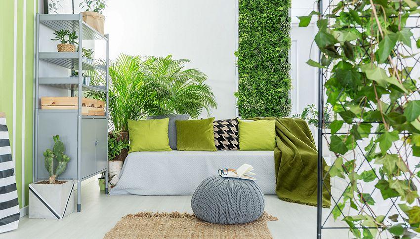 Trasforma la casa in un'oasi con 200 specie di piante: guarda