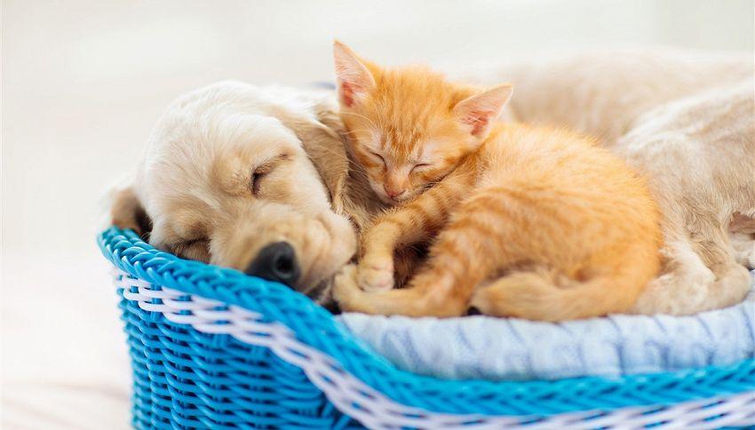 Cane e gatto, ecco il trucco per farli andare d'accordo
