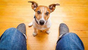 Ritrova il cane dopo un anno di ricerche e appelli social