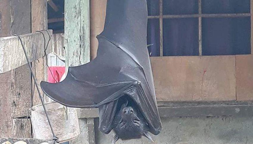 La foto del pipistrello gigante delle Filippine sconvolge il web