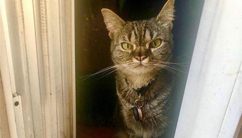 Gattina con due nasi diventa star su Instagram