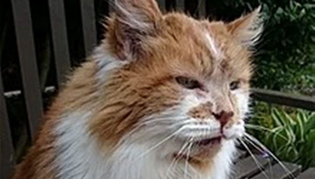 Addio a Rubble: è morto il gatto più vecchio del mondo