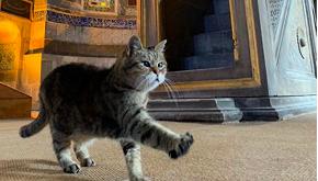 Il gatto che vive ad Hagia Sofia è una star del web