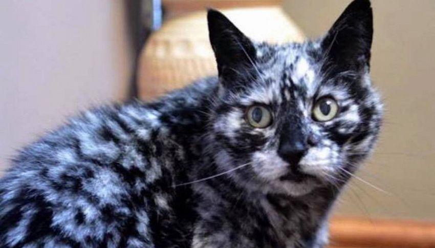 Scrappy, il gatto che ha cambiato 'colore'