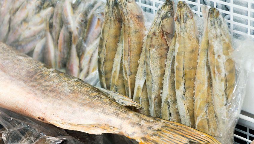 Pesce in congelatore quanto dura? Il giusto calcolo da fare
