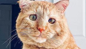 Mr Willis: un anno dopo l'adozione non è più il gatto più triste