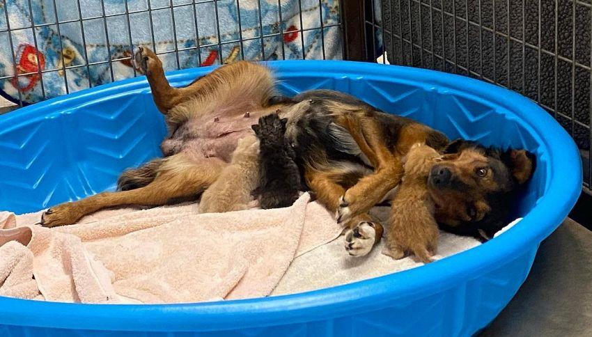 Cane adotta tre gatti: la storia incredibile di Georgia