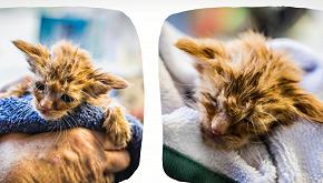 California, salvata dagli incendi una gattina uguale a Baby Yoda
