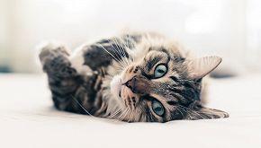 Città pet friendly: a Rozzano due gatti 'lavorano' in Comune