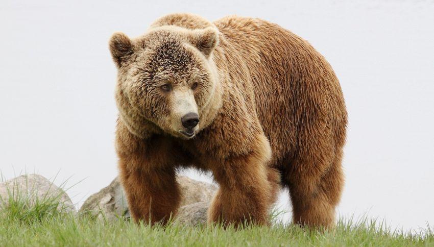 Un orso per amico: è la storia di Fausto e Bruno