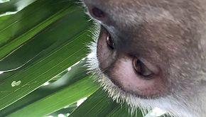 I selfie di una scimmia diventano virali sui social