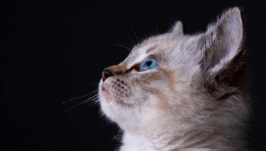 Scrive una lettera alla gatta in Paradiso, il postino risponde