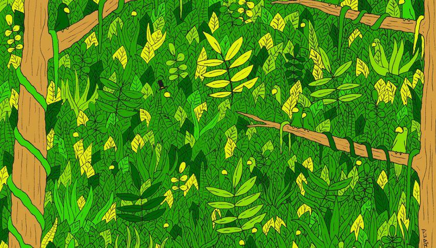 Test visivo, riesci a trovare il serpente nascosto nella giungla?