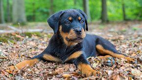Appello per Milo, cane 'paperotto' abbandonato per le sue zampe