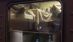Compra tutti i biglietti di un compartimento per i suoi gatti