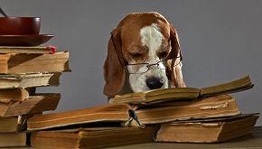 Il cane più intelligente? Lo incorona un talent show