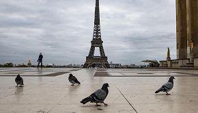 Un piccione viaggiatore è stato venduto a 1.6 milioni di euro