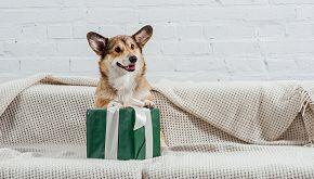 Il cane Koa ritrova il regalo rubato a un bambino