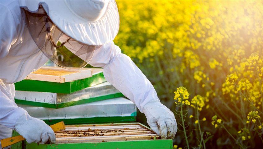Puoi adottare un alveare e ricevere il miele a casa