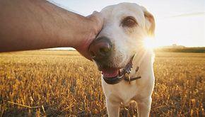 Eredità milionaria in Austria per un'associazione animalista