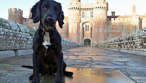 Da cane abbandonato a cane poliziotto: ecco il cocker Badger