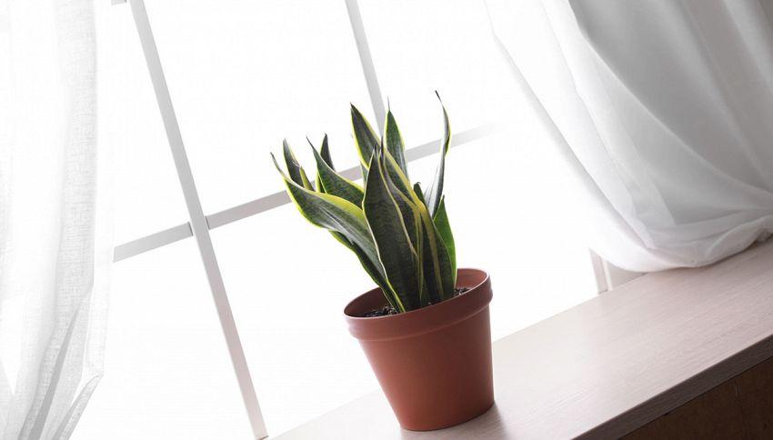 Dormi male? Tieni questa pianta nella camera da letto, ti aiuterà