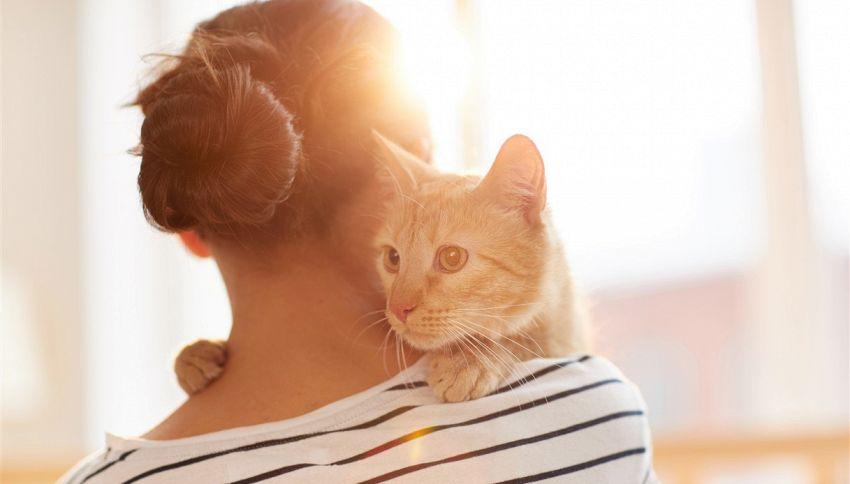 In che modo i gatti scelgono la loro persona preferita
