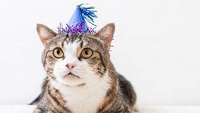 La festa di compleanno per un gatto diventa focolaio epidemico