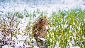 La seconda vita di Ginger, il gatto che ama la neve