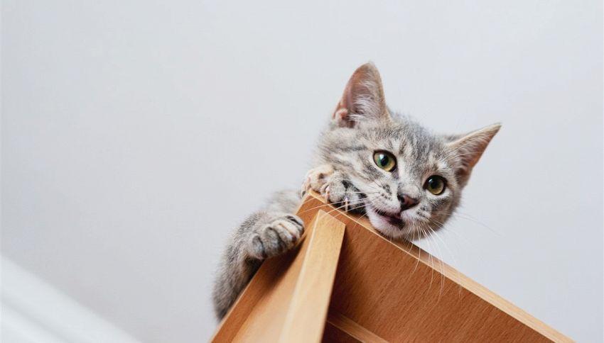 Come evitare che il gatto rovini i mobili